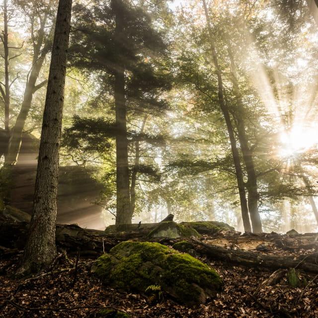 Forêt dans les Vosges du nord