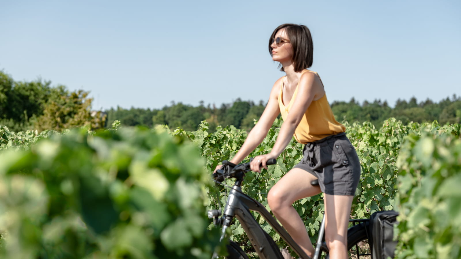 Sortie vélo au coeur des vignes
