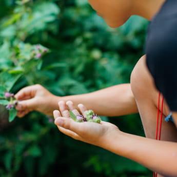 Les plantes sauvages au fil des saisons